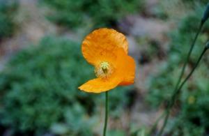 flower-765921_1920